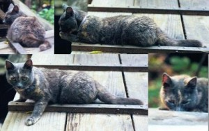 Various poses, mostly on the back porch ramp.