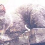 Agnes-Jul2001-1