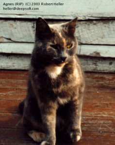 An old picture of Agnes the cat.